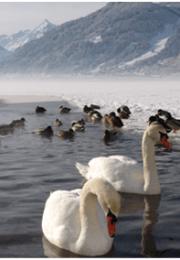 горнолыжный курорт Целль-ам-Зее